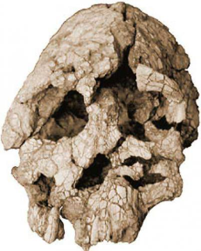 Cenyanthropus platyops